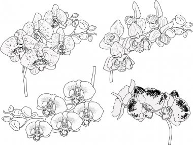 black sketches of orchid