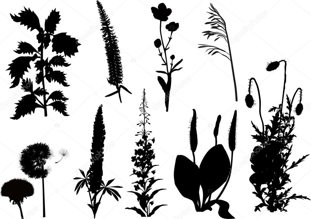 Wild flower silhouettes — Stock Vector © Dr.PAS #55581133