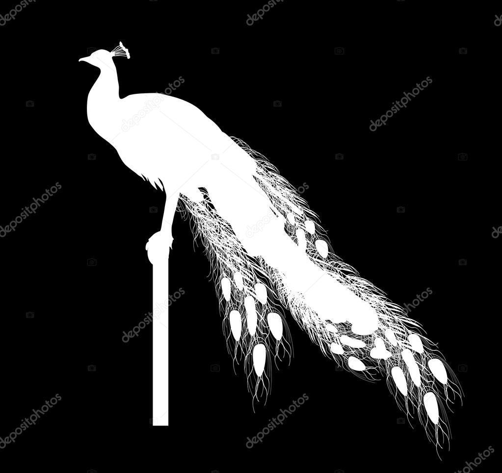 Sagoma di pavone bianco — Vettoriali Stock © Dr.PAS #55589281