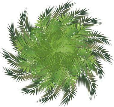 Circle palm leaves