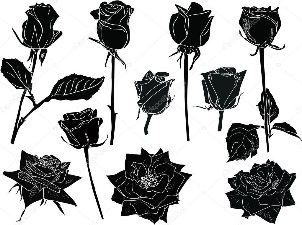Croquis Noir Et Blanc Roses Image Vectorielle Dr Pas C 55590289