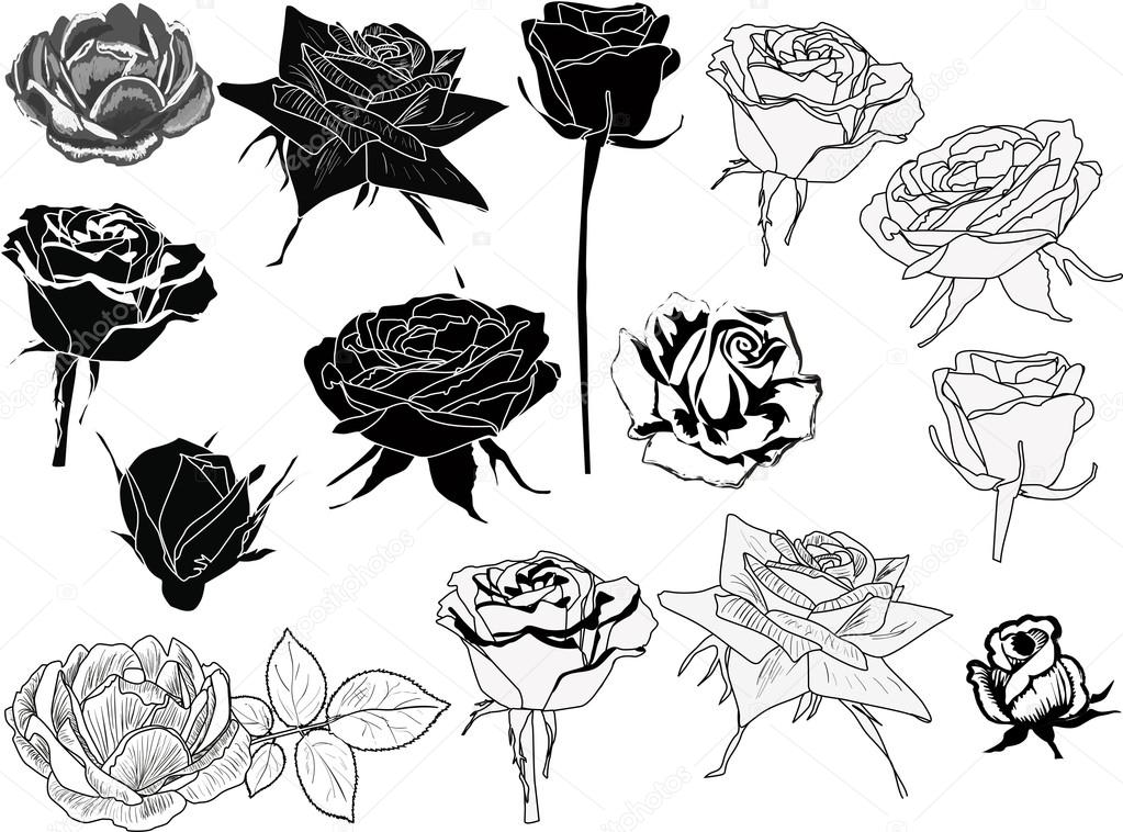 dibujos de rosas archivo imágenes vectoriales dr pas 55590719