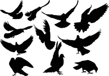 black pigeons silhouettes