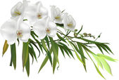 Fotografie green bamboo branch and orchids