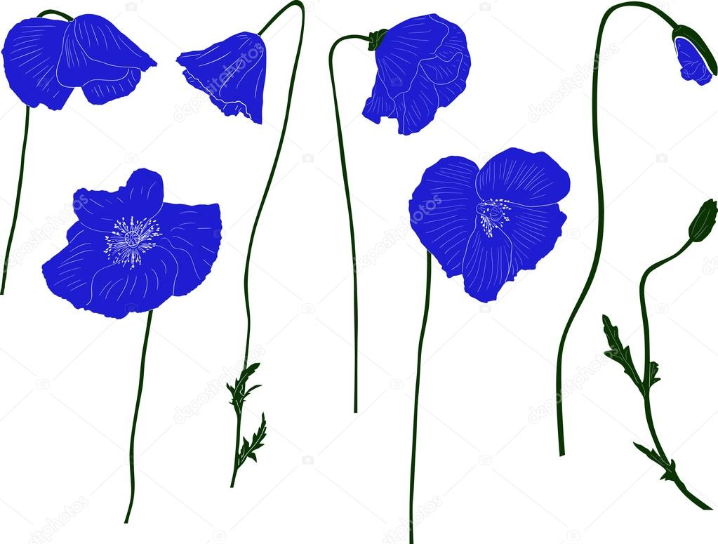 Blue Poppies Flowers Stock Vector Drs 84202974