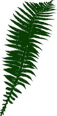 green fern silhouette