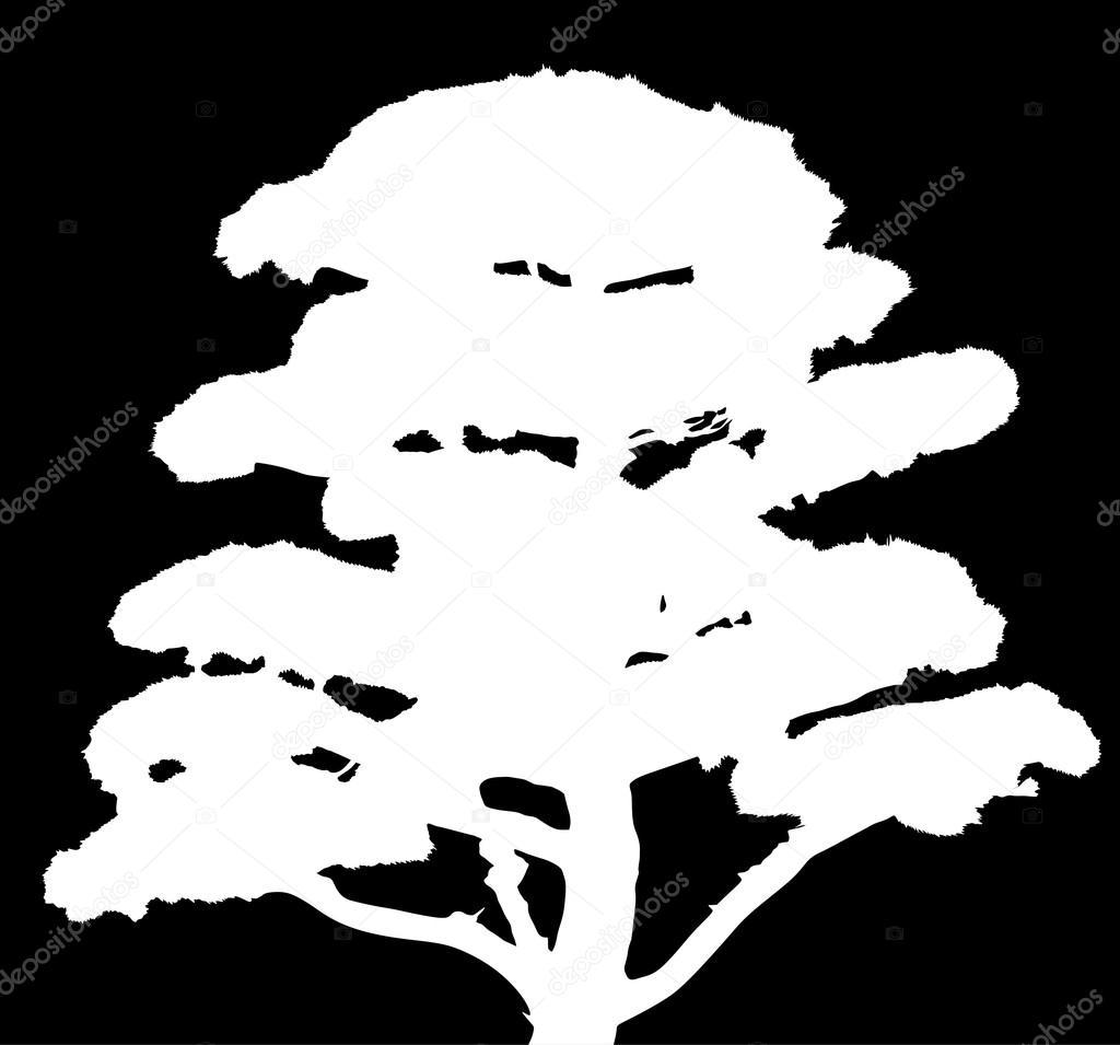 Stock Vector Dr Pas 6261329: Silueta De árbol De Pino Blanco
