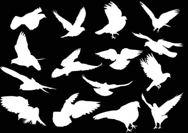 white pigeons silhouettes