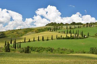 Cypress trees along winding rural road. Tuscany, Italy stock vector