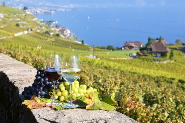 Wine and grapes in  Lavaux