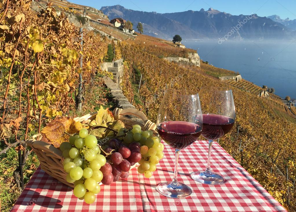 Wine and grapes. Lavaux