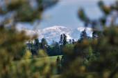 zasněžené vrcholky hor na pozadí zelených stromů