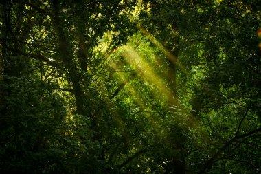 """Картина, постер, плакат, фотообои """"и зеленый лес постеры"""", артикул 114368006"""