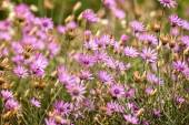 closeup krásné divoké květiny na louce