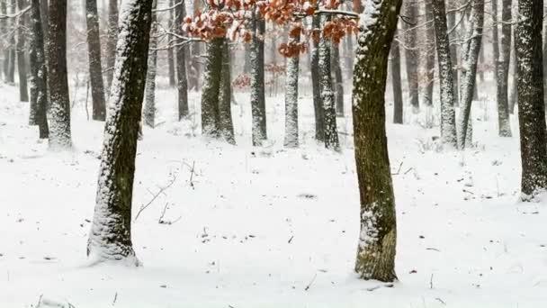 Zasněžené zimy v lese