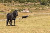 Fotografia cavalli