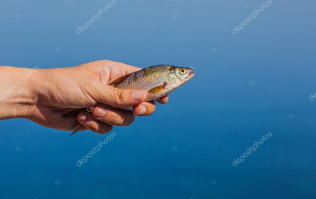 Fisher man holding in his hand caught, river fish on the background of the river.