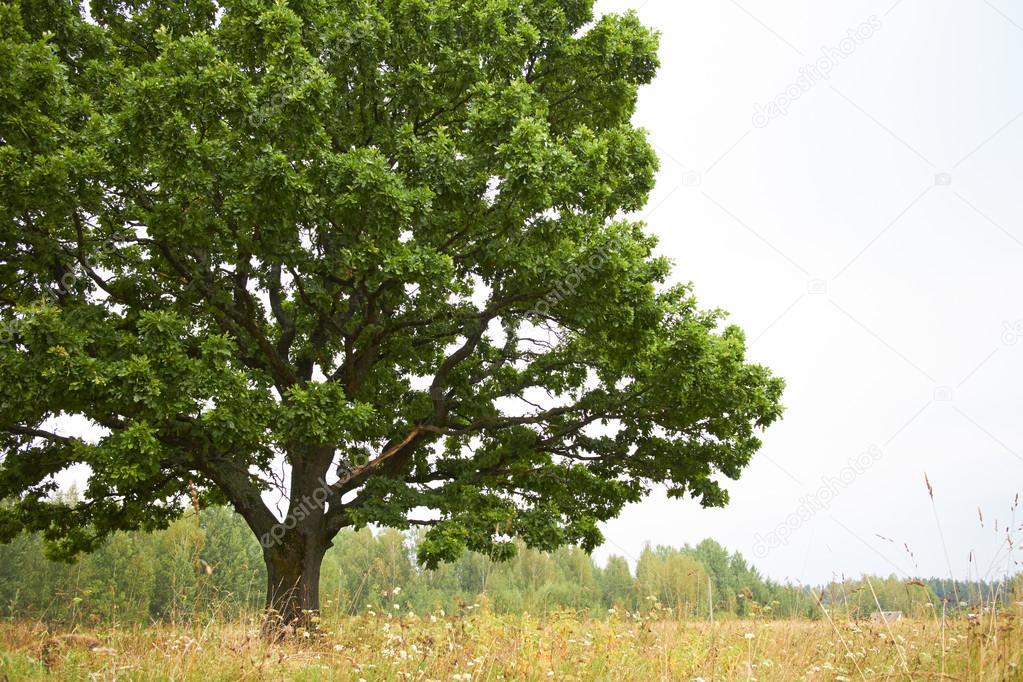 Tree on the summer field stock vector