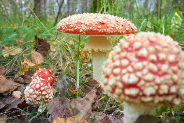 Spotted toadstools