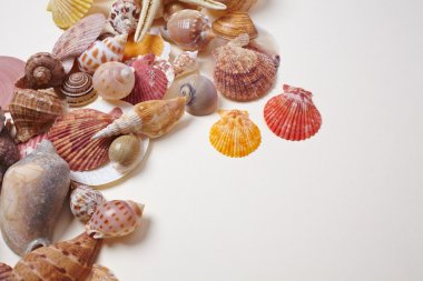 sea shells as background
