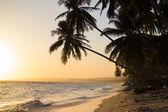 Fotografie Krásná tropická pláž