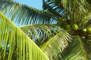 palms over blue sky