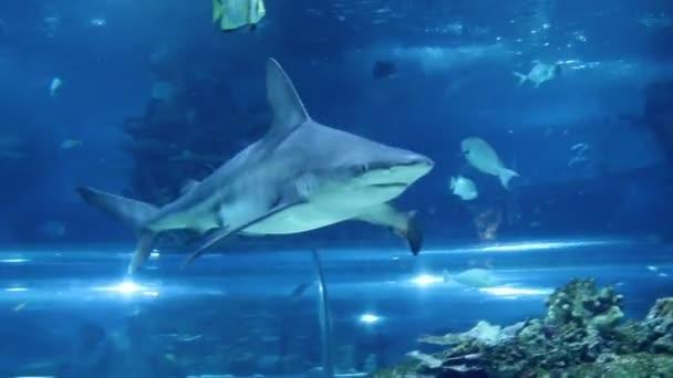 shark swimming in aquarium