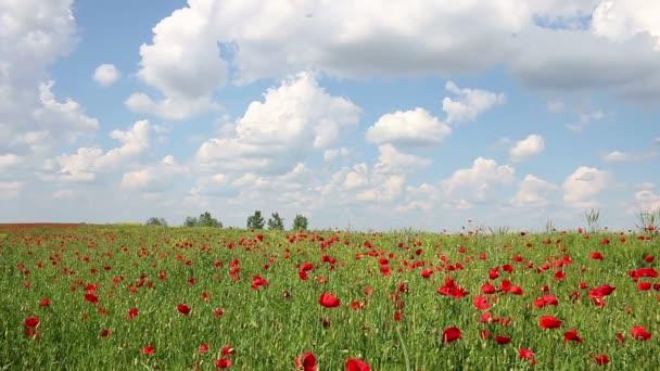 mák Květiny a modrou oblohu s mraky na šířku