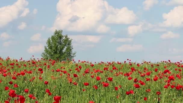 poppy flowers and tree on meadow landscape