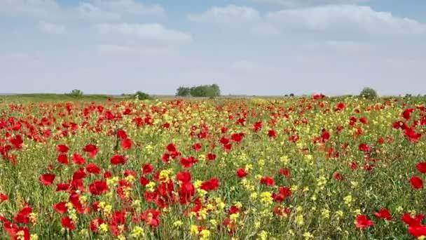 Květy jarní louka krajina