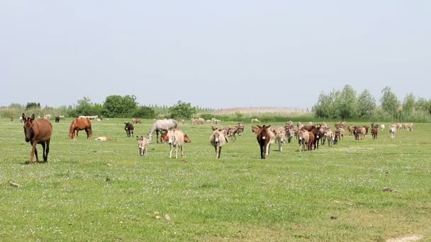 donkeys walking on field