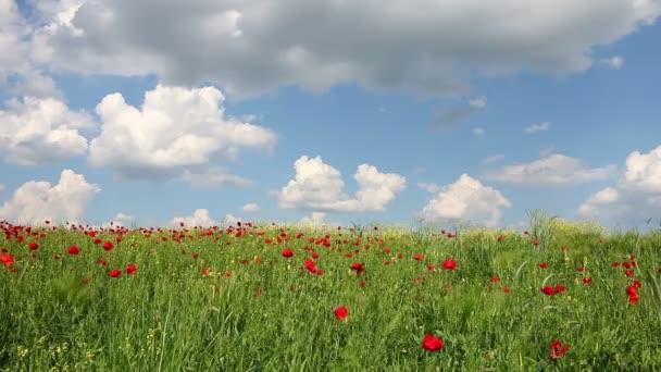 mák květinová louka krajina