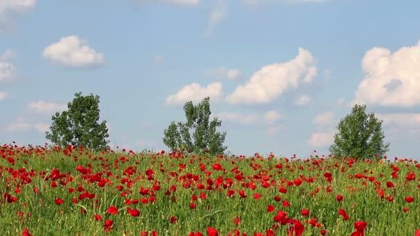 mák Květiny a stromy krajina