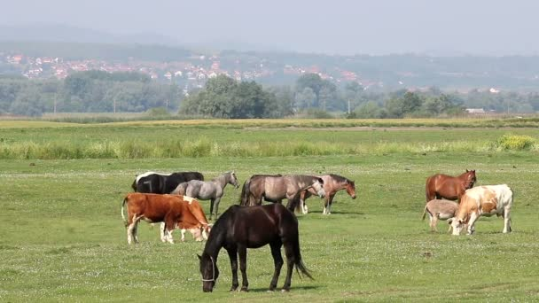 cows and horses on pasture