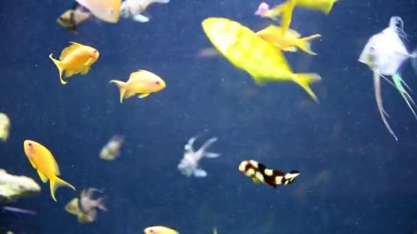 Tropische Fische schwimmen unter Wasser