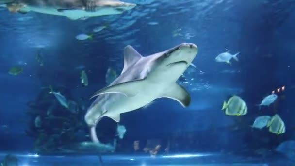 Sharks and fish swimming underwater