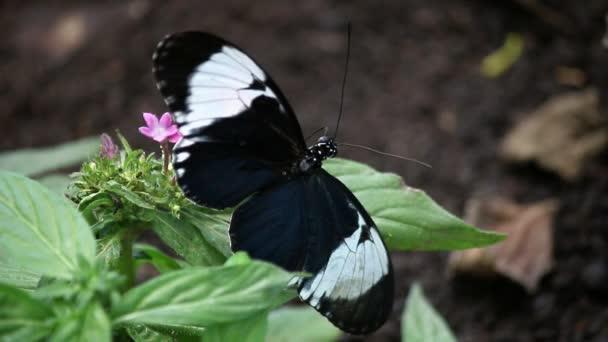 motýl na květině zblízka