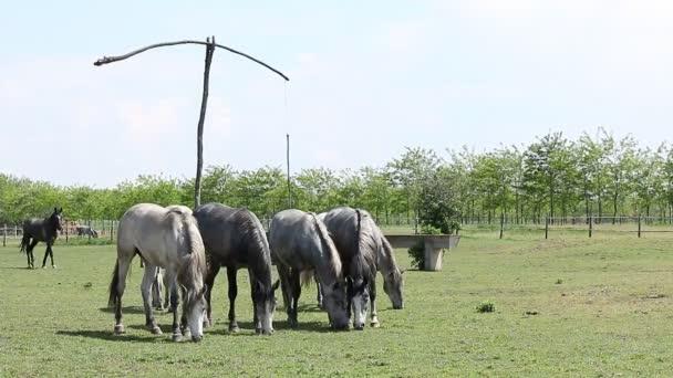 stádo koní na pastvinách