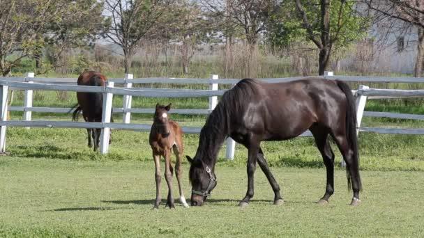 Koně na ranči a hříbě