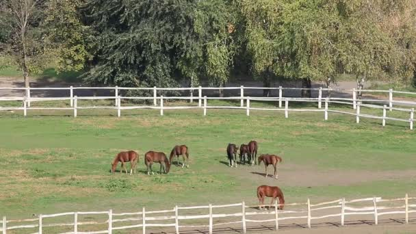 Stádo koní v ohradě na ranči