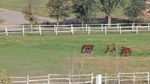 Pferdeherde im Gehege