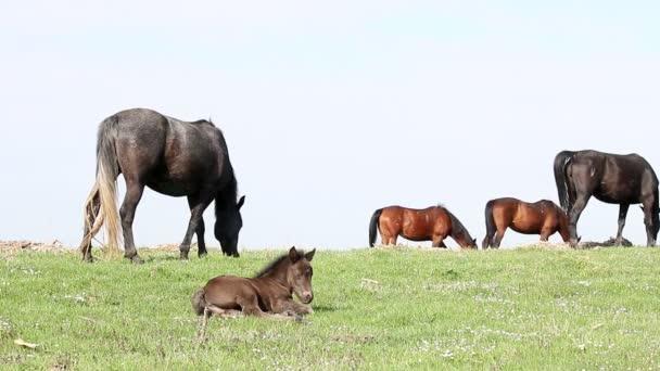 koně a hříbě na pastvině