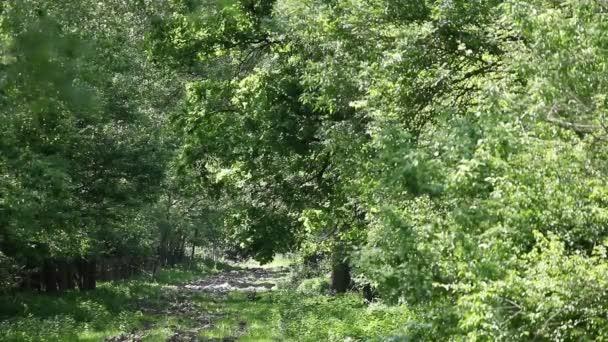 Jelení hlava silueta v lese
