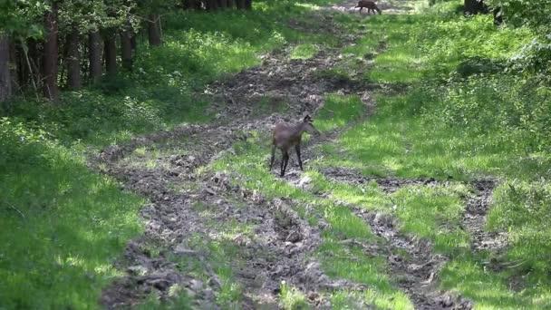 jelen lesní přírodní flóry