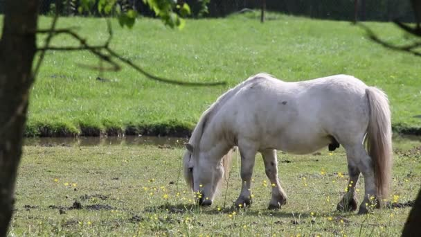 White pony horse on pasture