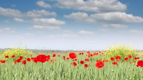 mák virág rét természetvédelmi táj