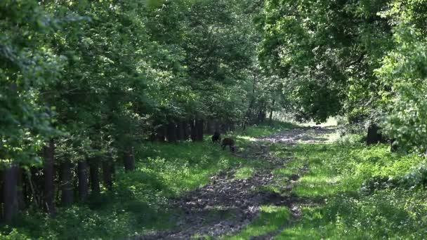 Szarvas legelészik erdei élővilág gazdagságát