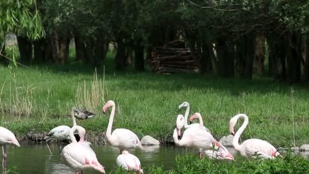 flamingos nature wildlife