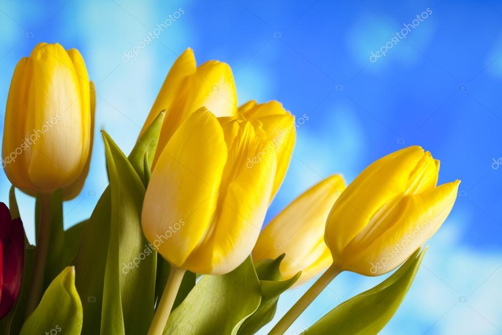 Flores De Primavera Tulipanes Amarillos Sobre Fondo De Naturaleza