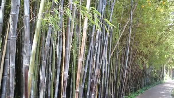 schöner Bambuswald
